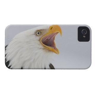 USA, Alaska, Homer. Bald eagle screaming. Credit iPhone 4 Cover