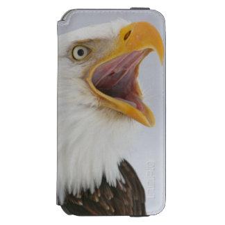 USA, Alaska, Homer. Bald eagle screaming. Credit iPhone 6/6s Wallet Case