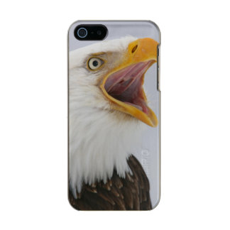 USA, Alaska, Homer. Bald eagle screaming. Credit Metallic iPhone SE/5/5s Case