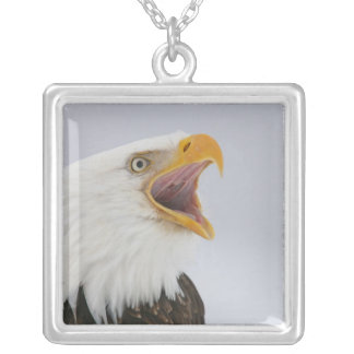 USA, Alaska, Homer. Bald eagle screaming. Credit Silver Plated Necklace