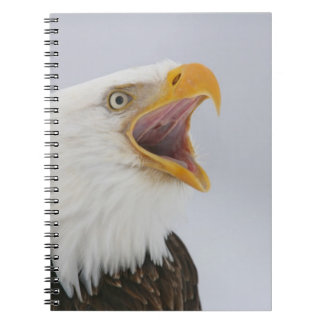USA, Alaska, Homer. Bald eagle screaming. Credit Spiral Notebook