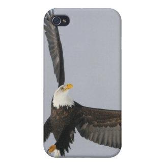 USA, Alaska, Homer. Bald eagle upside down start Cover For iPhone 4