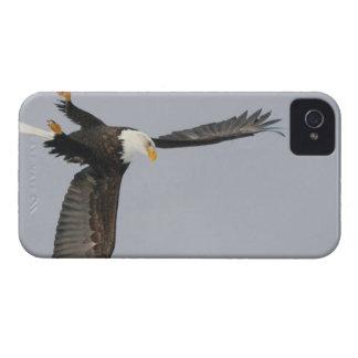 USA, Alaska, Homer. Bald eagle upside down start iPhone 4 Cover
