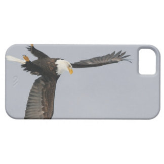 USA, Alaska, Homer. Bald eagle upside down start iPhone SE/5/5s Case