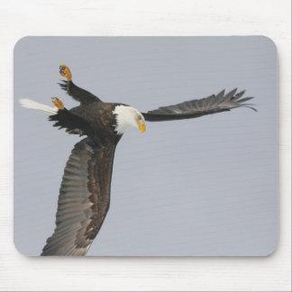 USA, Alaska, Homer. Bald eagle upside down start Mouse Pad