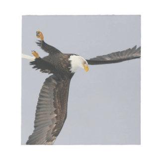 USA, Alaska, Homer. Bald eagle upside down start Notepad