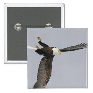 USA, Alaska, Homer. Bald eagle upside down start Pinback Button