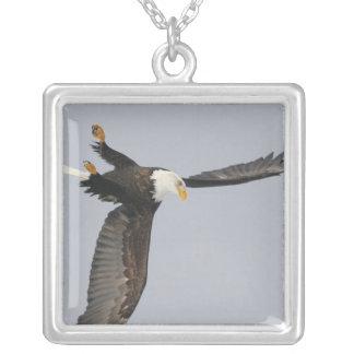 USA, Alaska, Homer. Bald eagle upside down start Silver Plated Necklace