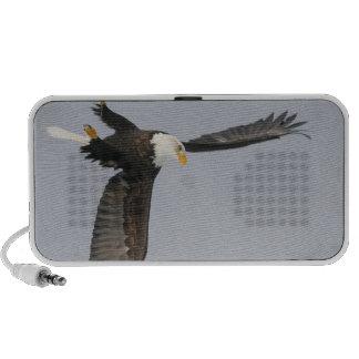 USA, Alaska, Homer. Bald eagle upside down start Speaker System