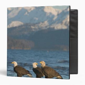 USA, Alaska, Homer, Bald Eagles Haliaeetus 3 Ring Binder