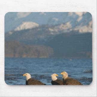 USA, Alaska, Homer, Bald Eagles Haliaeetus Mouse Pad