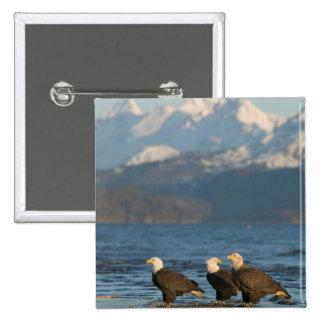 USA, Alaska, Homer, Bald Eagles Haliaeetus Pinback Button