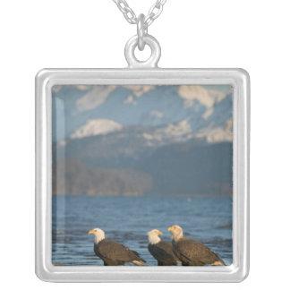 USA, Alaska, Homer, Bald Eagles Haliaeetus Silver Plated Necklace