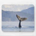 USA, Alaska, Icy Strait. Humpback Whale calf Mouse Pad