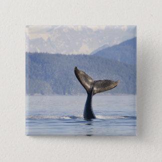USA, Alaska, Icy Strait. Humpback Whale calf Pinback Button