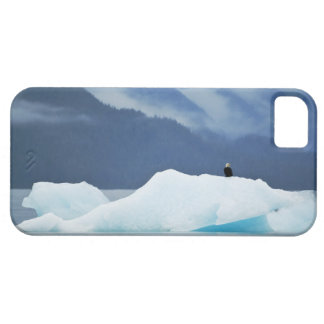 USA, Alaska, Inside Passage. Bald eagle perched iPhone SE/5/5s Case