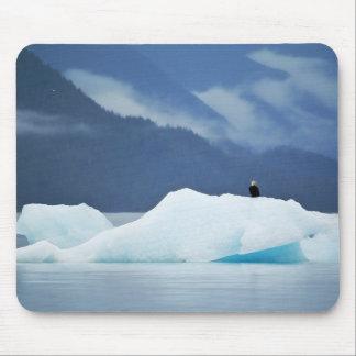USA, Alaska, Inside Passage. Bald eagle perched Mouse Pad