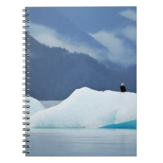 USA, Alaska, Inside Passage. Bald eagle perched Notebook