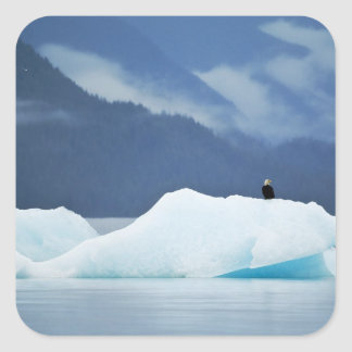 USA, Alaska, Inside Passage. Bald eagle perched Square Sticker