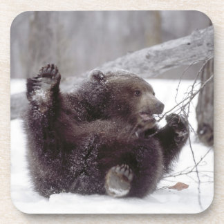 USA, Alaska. Juvenile grizzly plays with tree Coasters