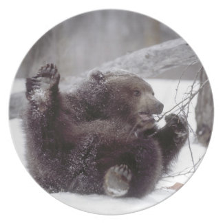 USA, Alaska. Juvenile grizzly plays with tree Dinner Plate