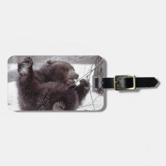 USA, Alaska. Juvenile grizzly plays with tree Luggage Tag