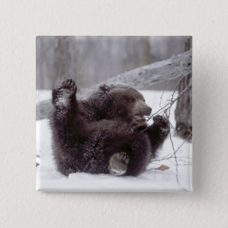 USA, Alaska. Juvenile grizzly plays with tree Pinback Button
