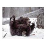 USA, Alaska. Juvenile grizzly plays with tree Postcard