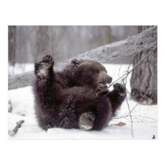 USA Alaska Juvenile grizzly plays with tree Postcard