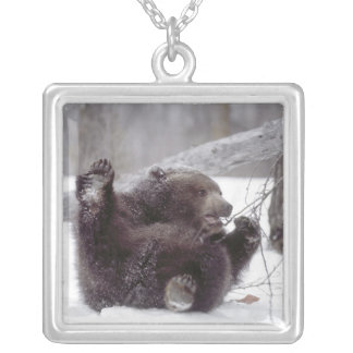 USA, Alaska. Juvenile grizzly plays with tree Silver Plated Necklace