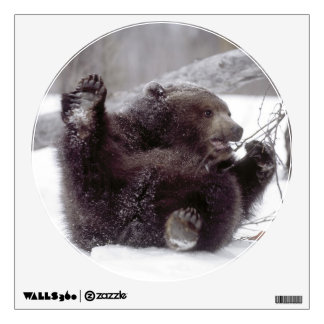 USA, Alaska. Juvenile grizzly plays with tree Wall Decal