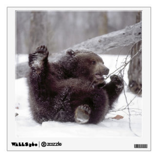 USA, Alaska. Juvenile grizzly plays with tree Wall Sticker