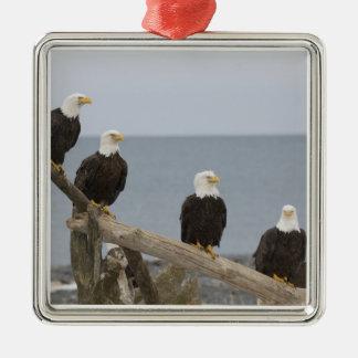 USA, Alaska, Kachemak Bay, Homer Spit. Bald Metal Ornament