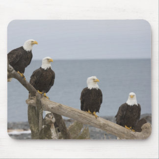 USA, Alaska, Kachemak Bay, Homer Spit. Bald Mouse Pad