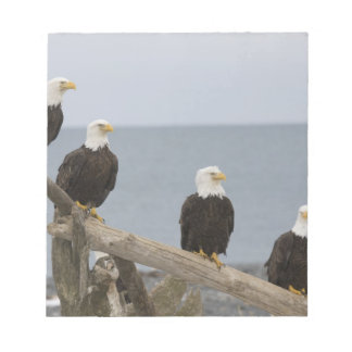 USA, Alaska, Kachemak Bay, Homer Spit. Bald Note Pad