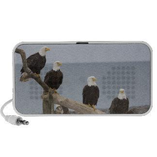 USA, Alaska, Kachemak Bay, Homer Spit. Bald Speaker