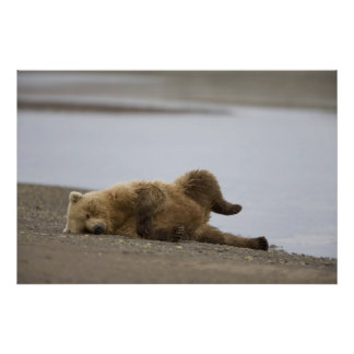 USA, Alaska, Katmai National Park, Brown Bear 2 Poster