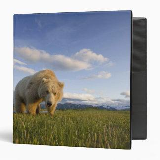 USA, Alaska, Katmai National Park, Brown Bear 3 3 Ring Binders