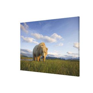 USA, Alaska, Katmai National Park, Brown Bear 3 Canvas Print