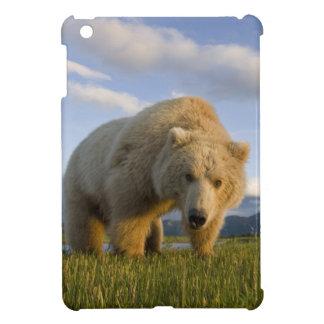 USA, Alaska, Katmai National Park, Brown Bear 3 Case For The iPad Mini