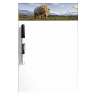 USA, Alaska, Katmai National Park, Brown Bear 3 Dry-Erase Board