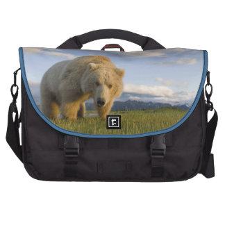 USA, Alaska, Katmai National Park, Brown Bear 3 Computer Bag