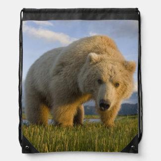 USA, Alaska, Katmai National Park, Brown Bear 3 Drawstring Bag