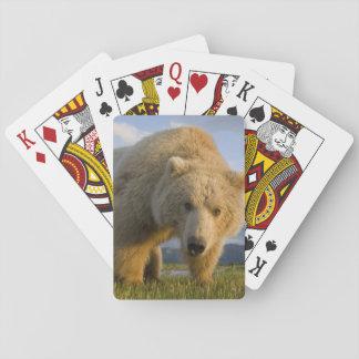 USA, Alaska, Katmai National Park, Brown Bear 3 Playing Cards