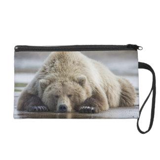 USA, Alaska, Katmai National Park, Brown Bear 4 Wristlets