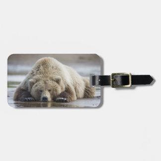 USA, Alaska, Katmai National Park, Brown Bear 4 Bag Tag