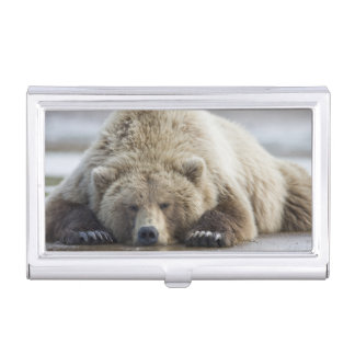 USA, Alaska, Katmai National Park, Brown Bear 4 Business Card Holder