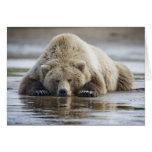 USA, Alaska, Katmai National Park, Brown Bear 4 Card