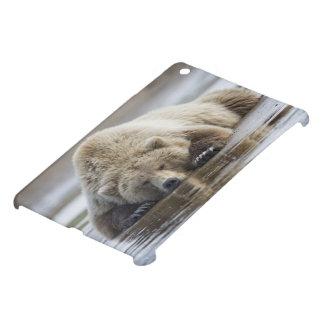 USA, Alaska, Katmai National Park, Brown Bear 4 iPad Mini Case