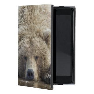 USA, Alaska, Katmai National Park, Brown Bear 4 iPad Mini Covers